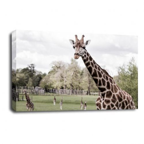 George the Giraffe - Canvas Wall Art Picture Print
